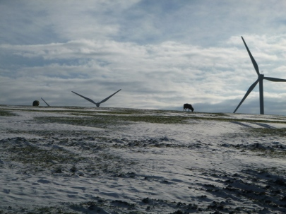 Sheep with wind turbines