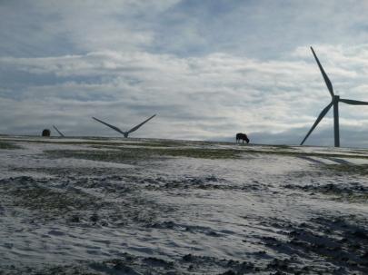 Sheep with wind turbines