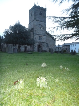 Snowdrops at Kirkby Lonsdale church