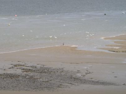 Birds on the bay